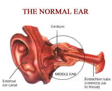 The Normal Ear